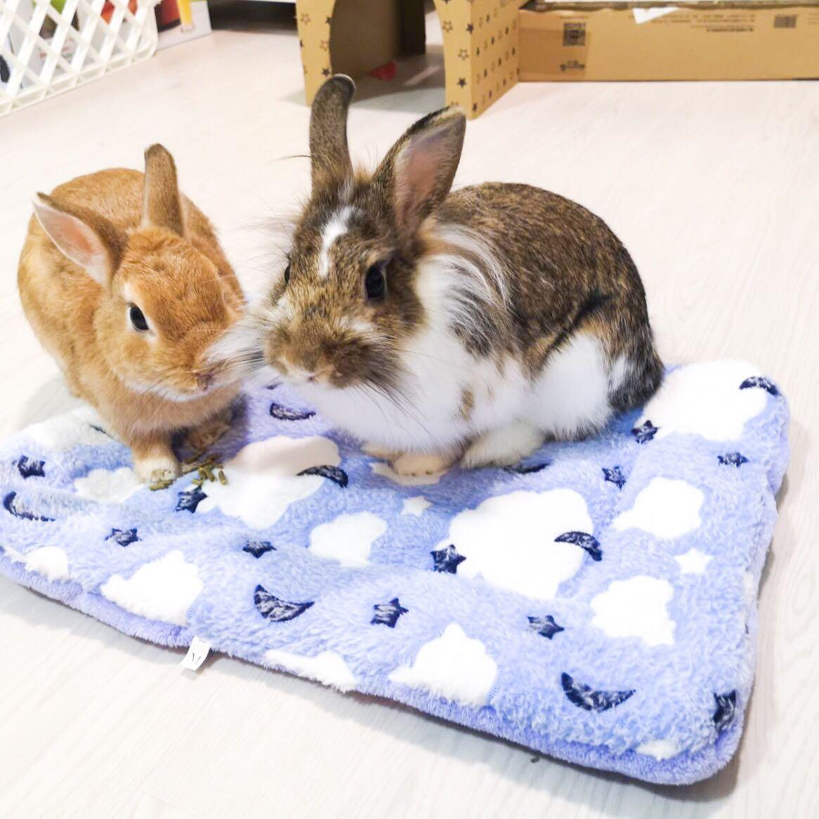 Fluffy Pet Cushion for Small Animals