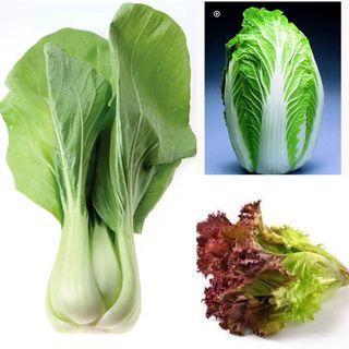 Vegetable Seed Set