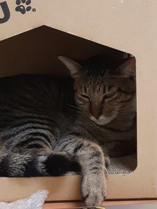 【貓】很可愛給你看看而已
