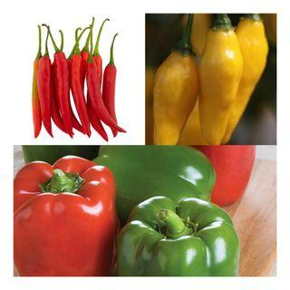 3 in 1 Pepper Seeds Set
