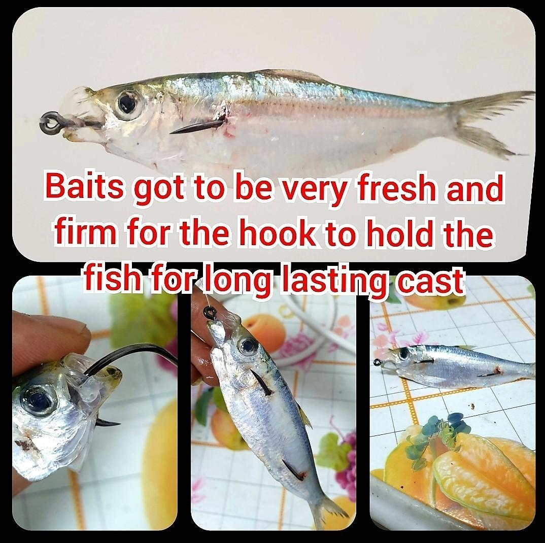 Tamban Quality Fishing Baits