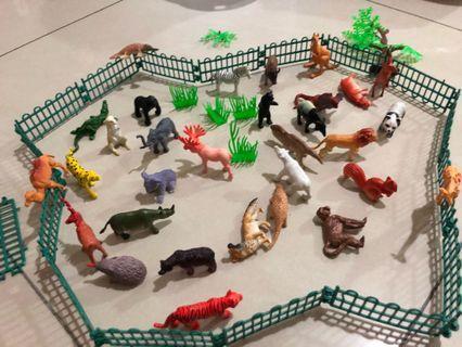 動物模型組