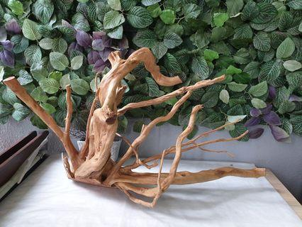 Driftwood for fish tank