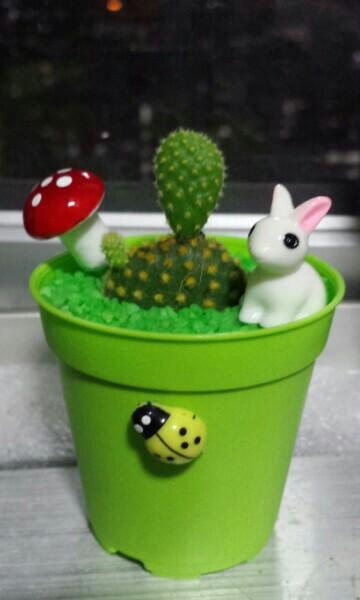 Fan cactus mini succulent garden plant gift birthday mini bunny ears available