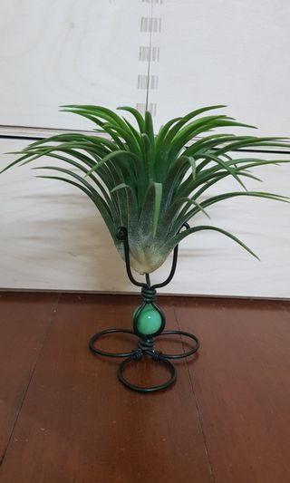 Gift,handmade air plant stand, desktop plant, indoor plant, mini bonsai, home office kitchen decoration