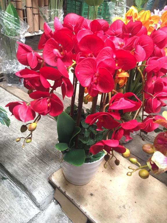 Orkid Viral