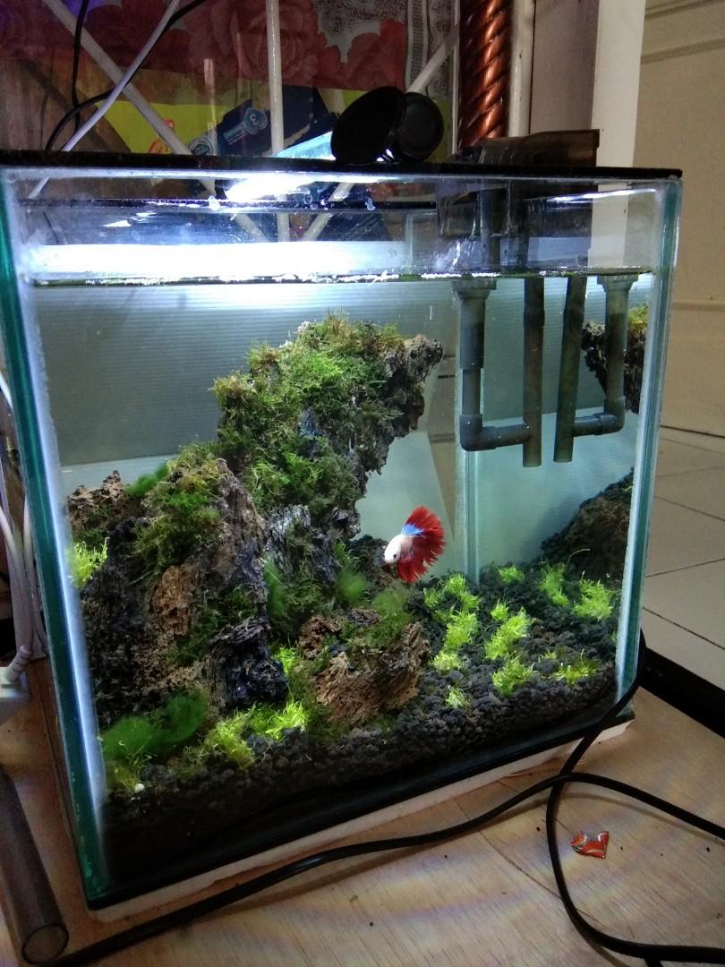 Aquascape Aquarium Ikan Cupang Perlengkapan Hewan Aksesoris Hewan Di Carousell