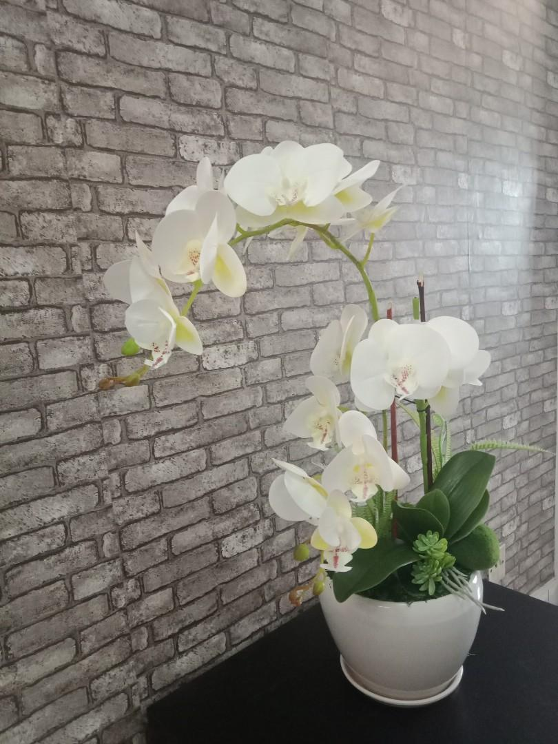 Orchid latex white