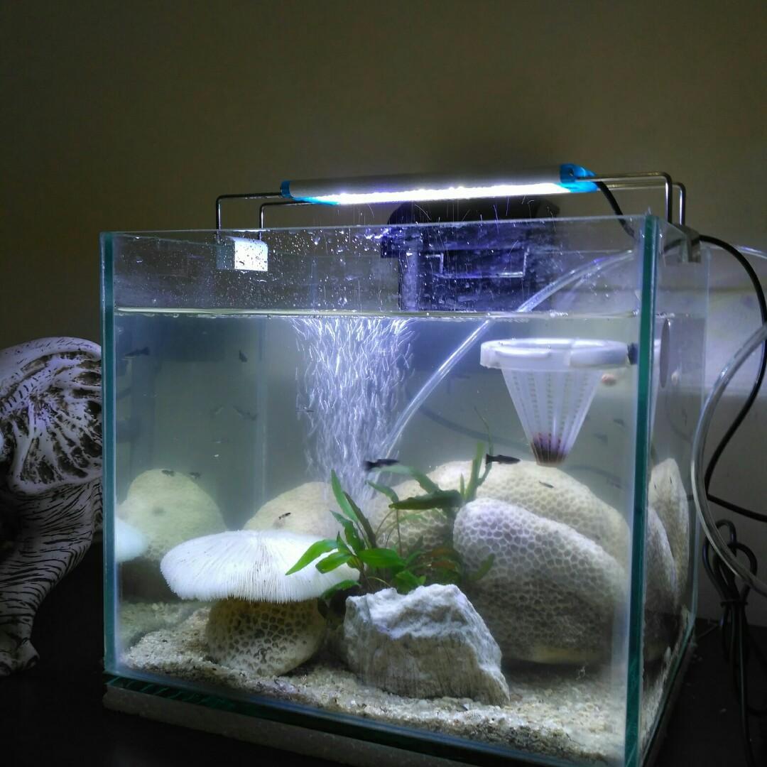 Aquarium fullset karang dan ikan koki