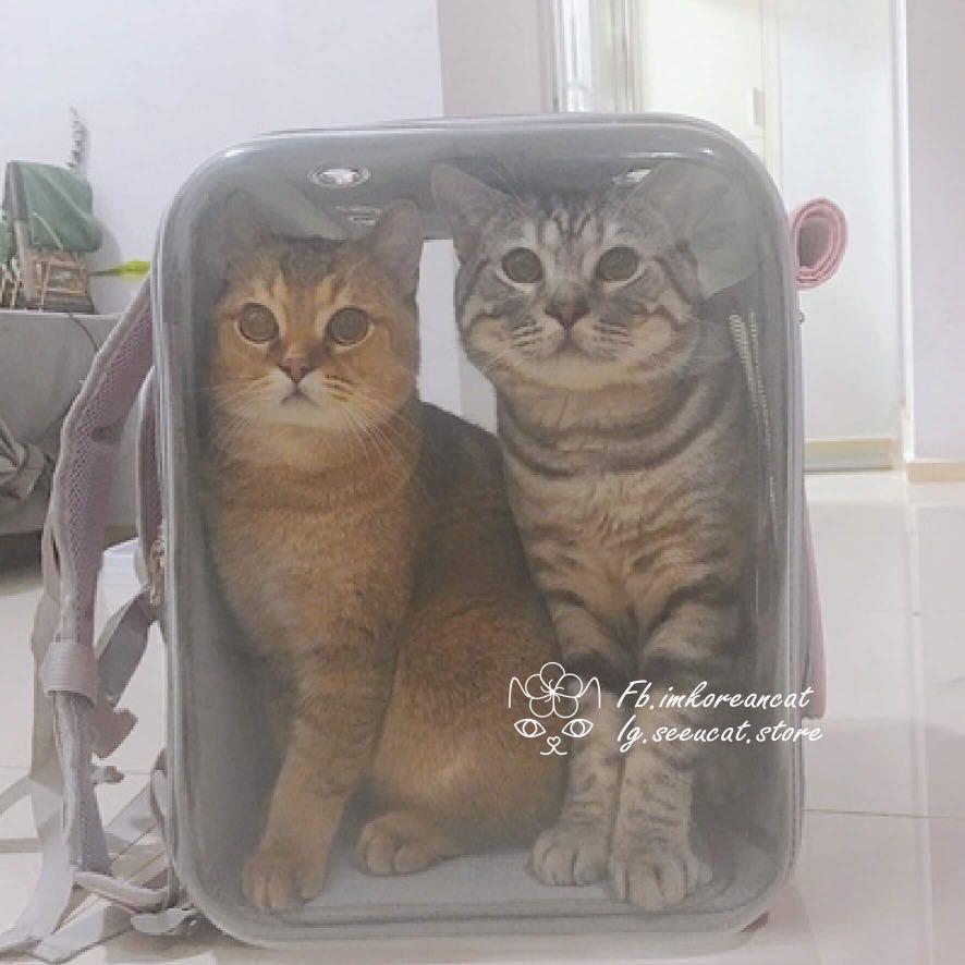 🎏Petseek寵物旅行太空袋🐈2色可選