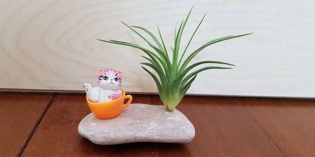 Children day's gifts, air plant, indoor plant, mini bonsai, desktop plant, home office kitchen balcony decoration