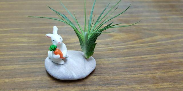 Air Plant, children day's gifts, wedding gifts, party gifts, desktop plant, indoor plant, home office kitchen balcony decoration, bonsai