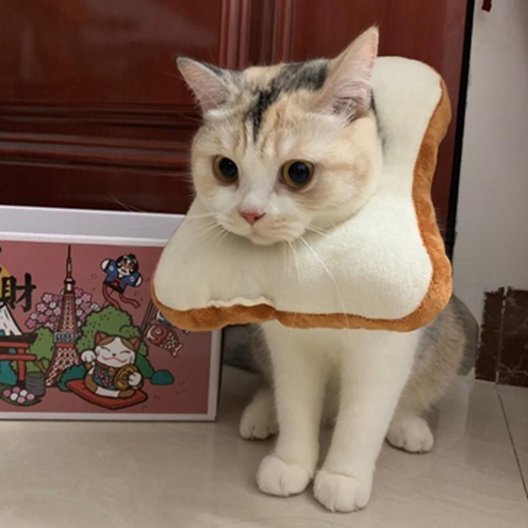 貓咪吐司頭套 貓咪吐司頸脖 寵物妨舔圈 貓咪妨舔圈 貓咪項圈 寵物造型服飾
