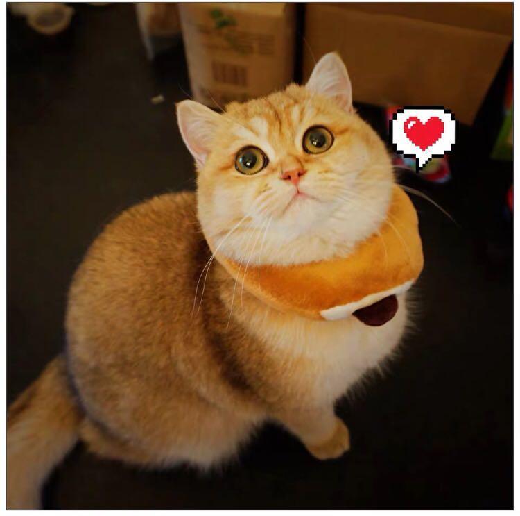 貓咪頭套《吐司造型》