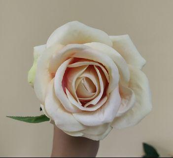 Artificial Rose champagne flower x 1pcs(rental only)