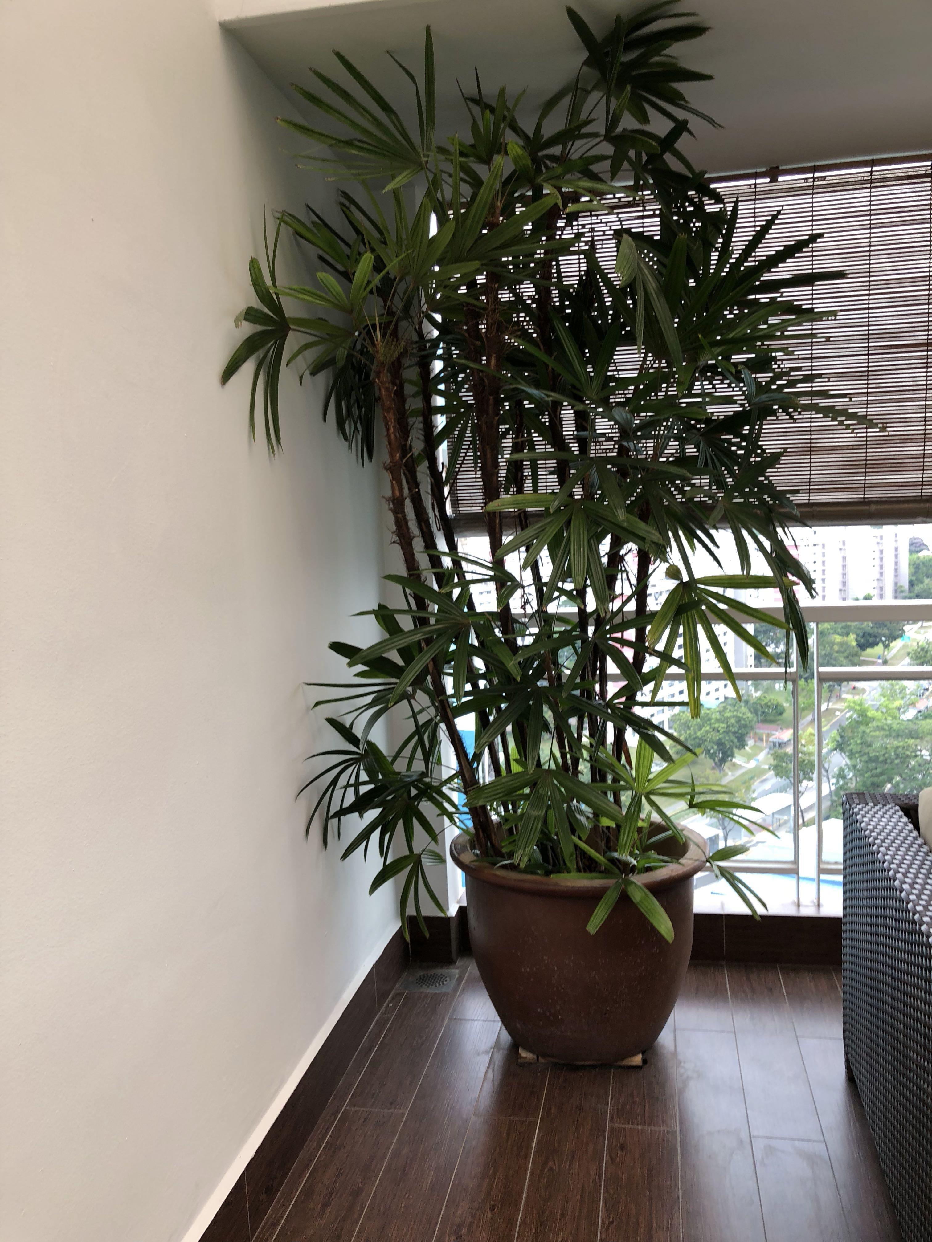 Glazed terracotta plant pots - 50cm diameter,60 cm height