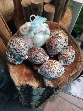 Table deco - shells