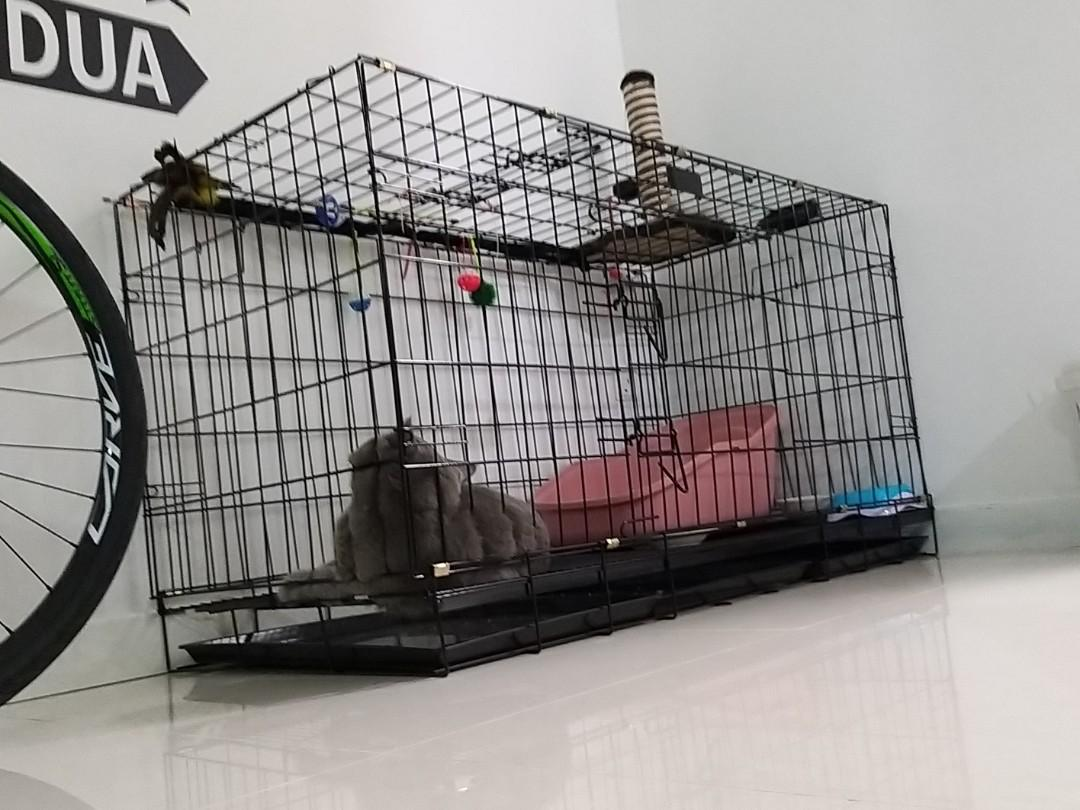 Cat big cage buying at $140 early sept