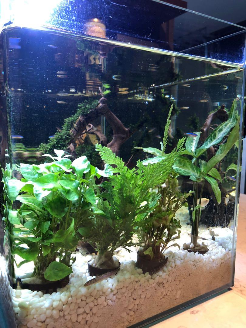Selling entire tank with fish and driftwood