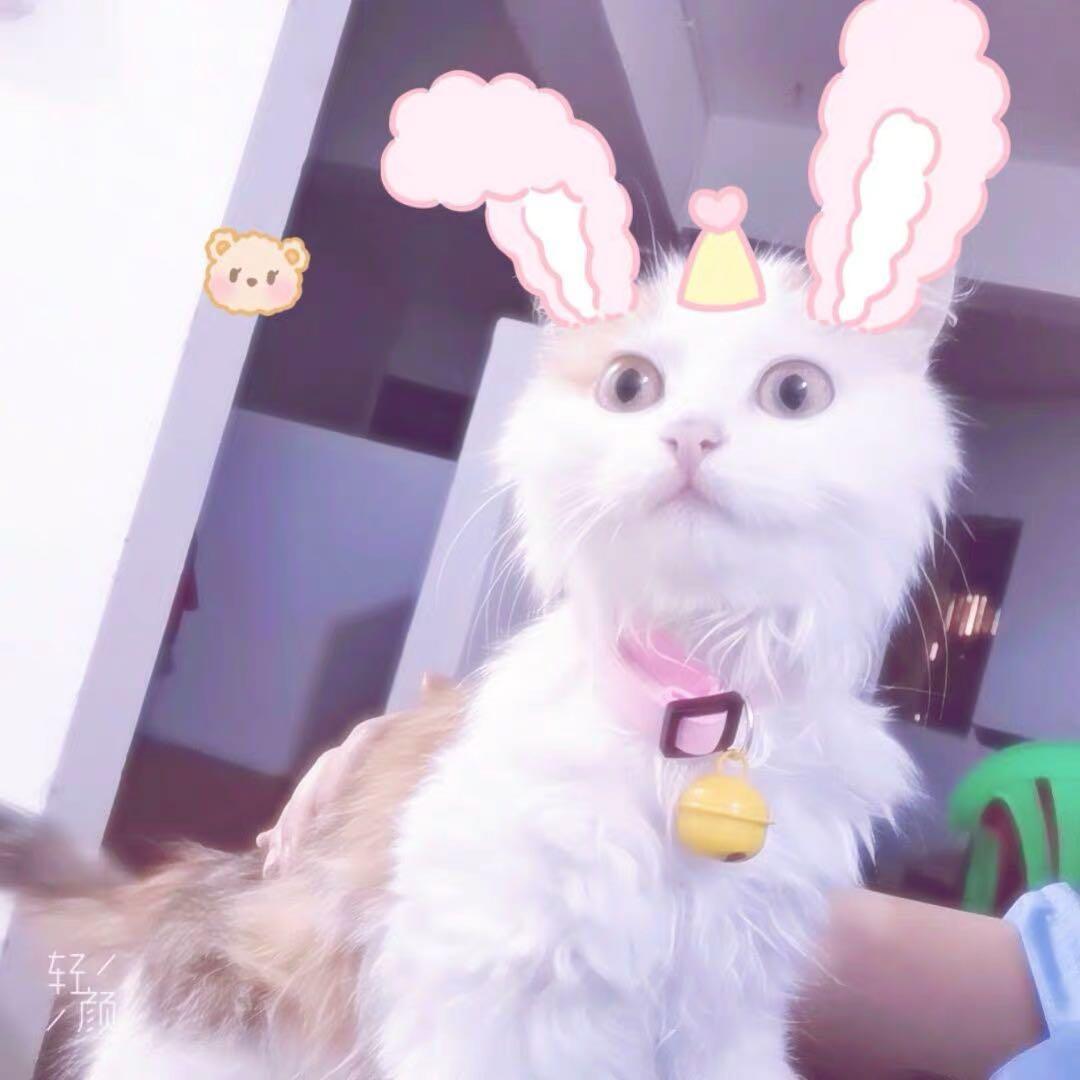 貓項圈 韓國絨面材質 附鈴鐺