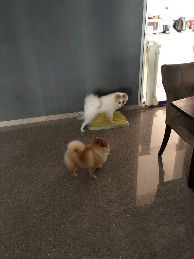 Dog Boarding @ Sengkang