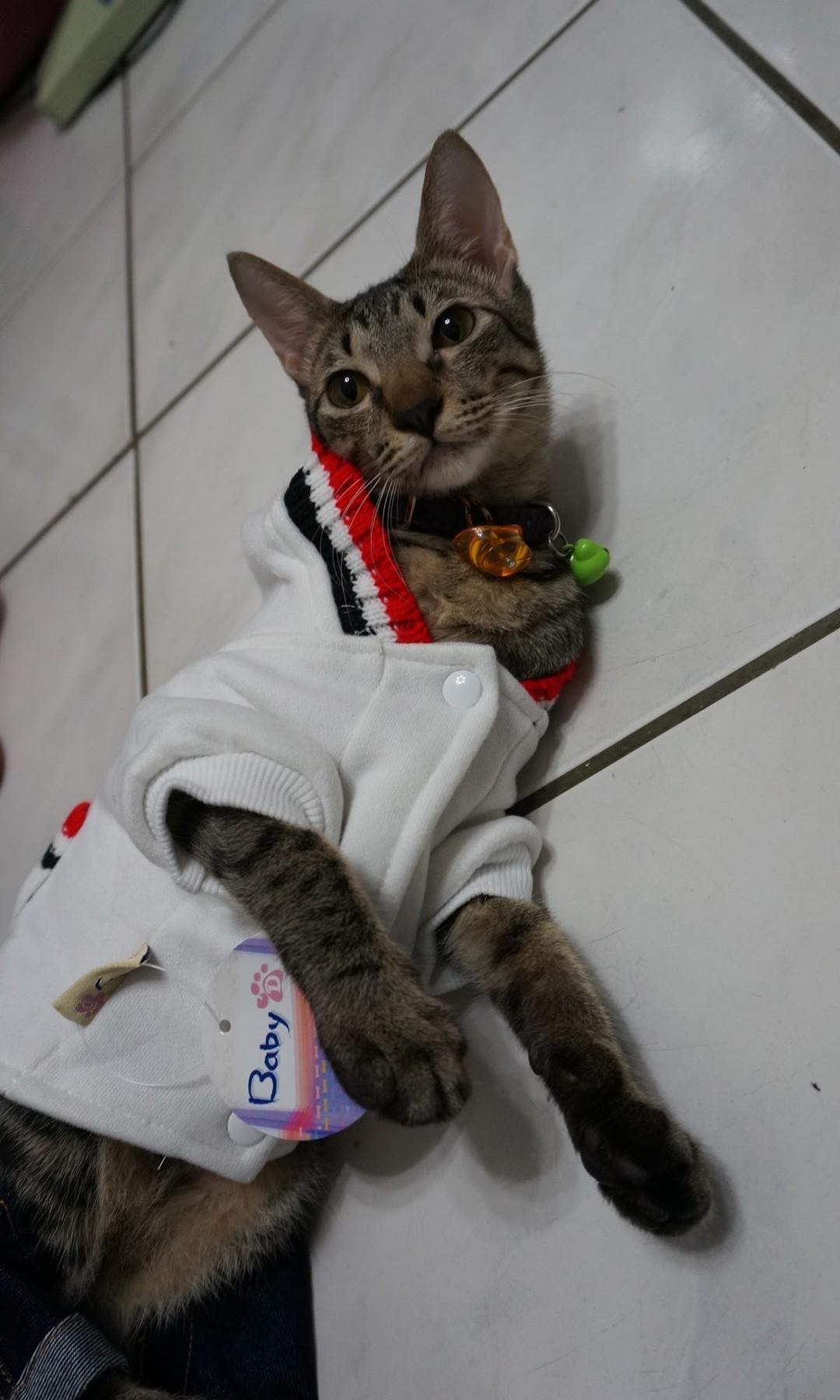 毛小孩(小型貓狗)衣服(僅穿過一次拍照 可議價)