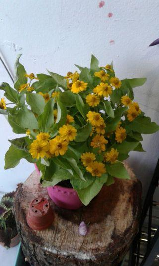 Beautifull plant Rm 20 only