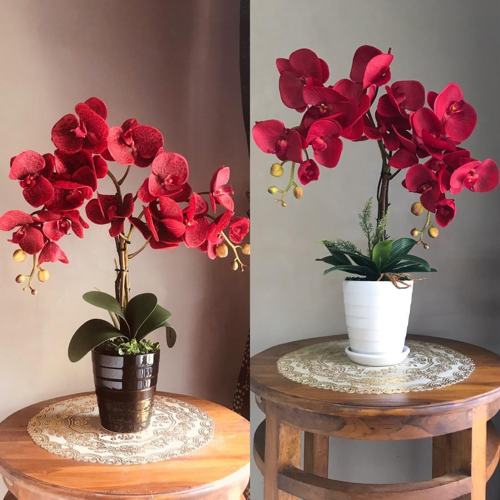 Orchid viral