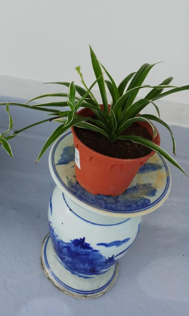 Porcelain  Plant Stand (in pair)