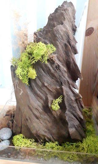 Kayu Hiasan - Wood for decoration