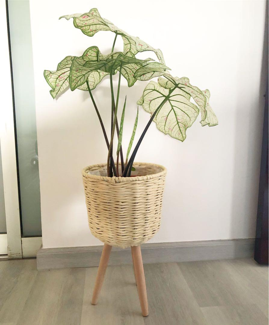 Penelope plant stand