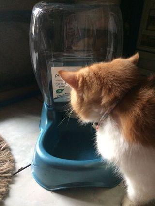 Dispenser minum kucing