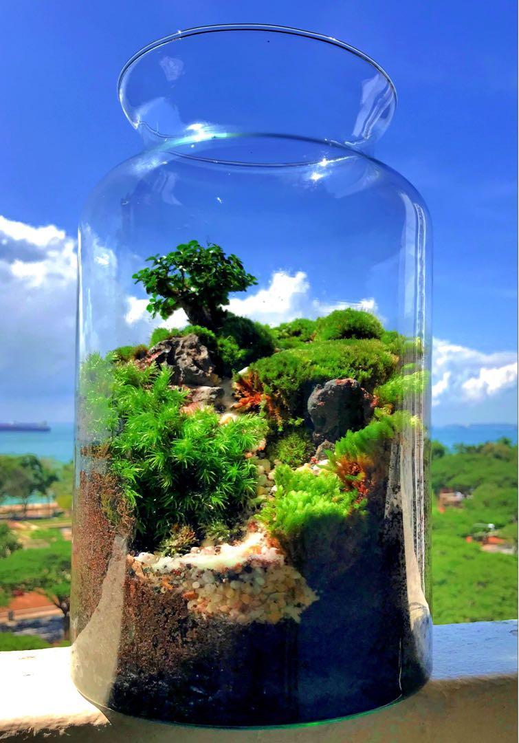 Bonsai Terrarium Gardening Plants On Carousell