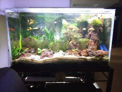 Aquascape Fullset