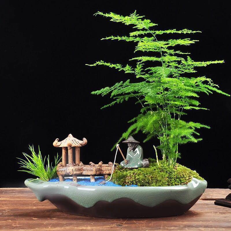 Bonsai Asparagus Fern In Unique Pot Indoor Bonsai Gardening Plants On Carousell