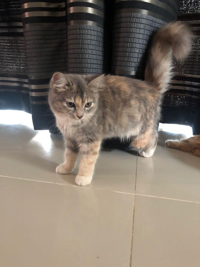 Cat Smokey