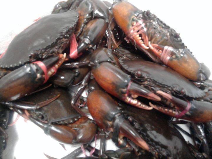 Supplier crab