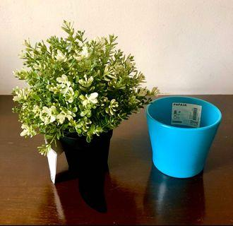 Potted plant + aqua blue pot/vase