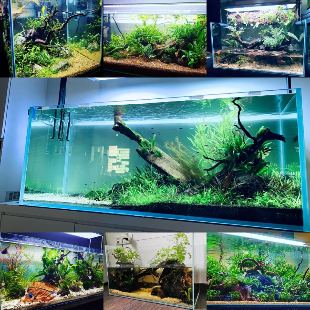 Aquarium Display Art