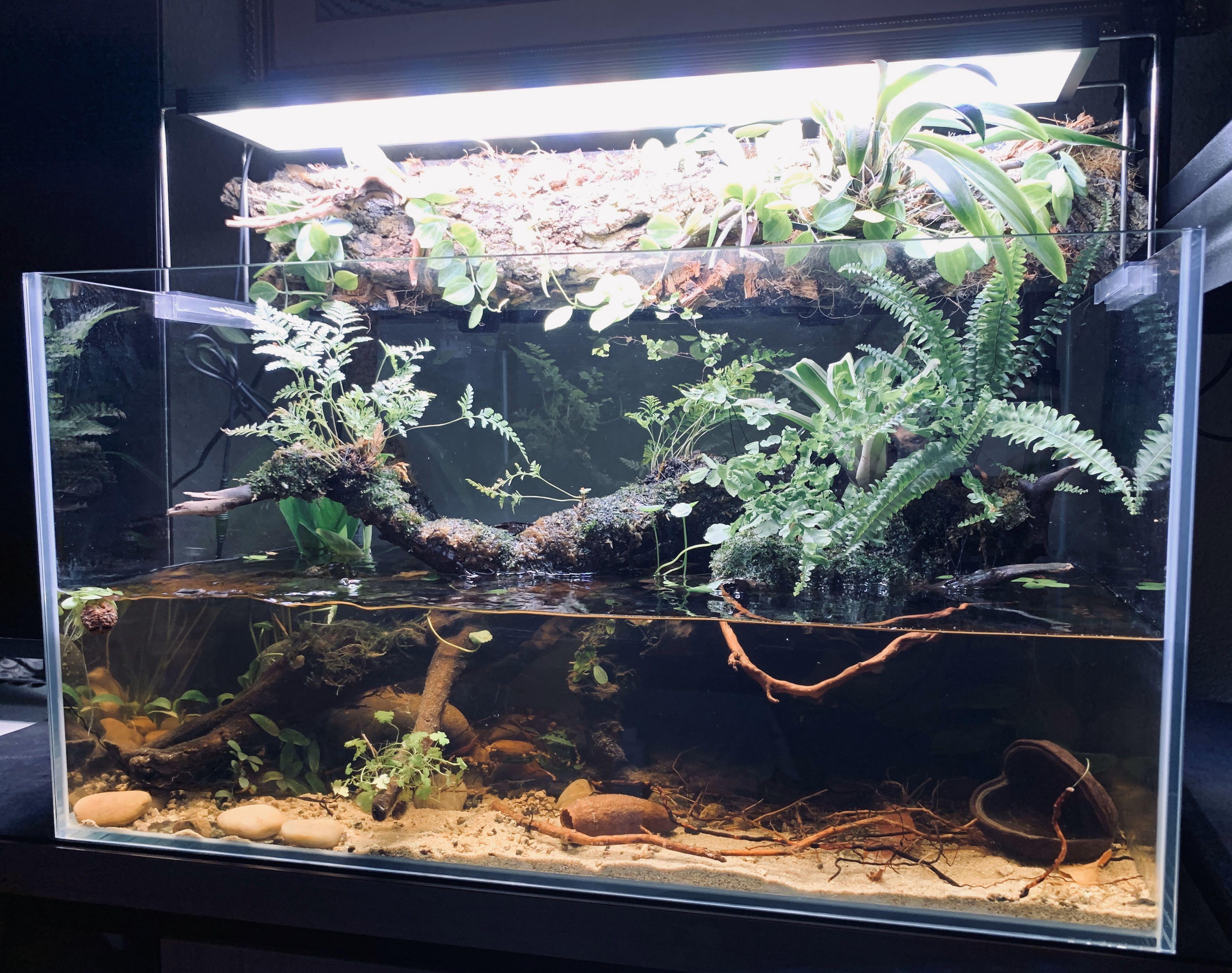 Nature Aquarium - Wild Terrestrial