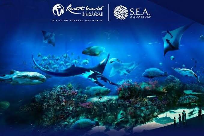 Sea Aquarium Singapore Ticket - 1 Day Pass