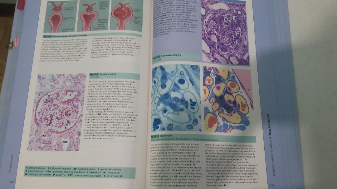 Wheater's Functional Histology, A Text and Colour Atlas by Young, et. al 5th edition, International Edition