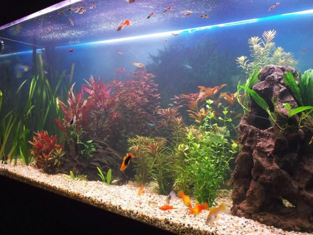Fishtank cleaning and maintance