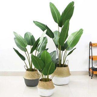 ARTIFICIAL BANANA LEAF PLANT / POKOK PISANG VIRAL