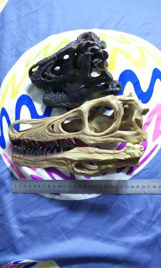 Dinosaur skull 1:1 real scale