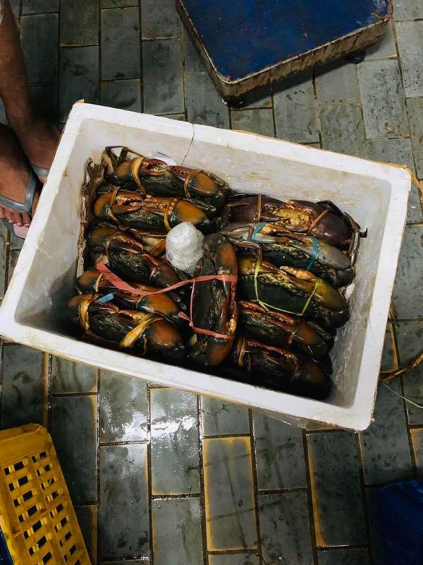 Fresh Seafood - Crabs