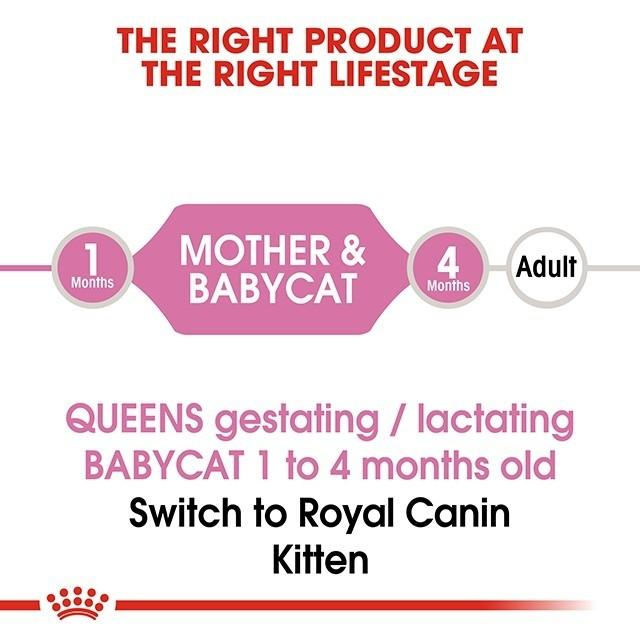☑Royal Canin Mother & Babycat Dry Food