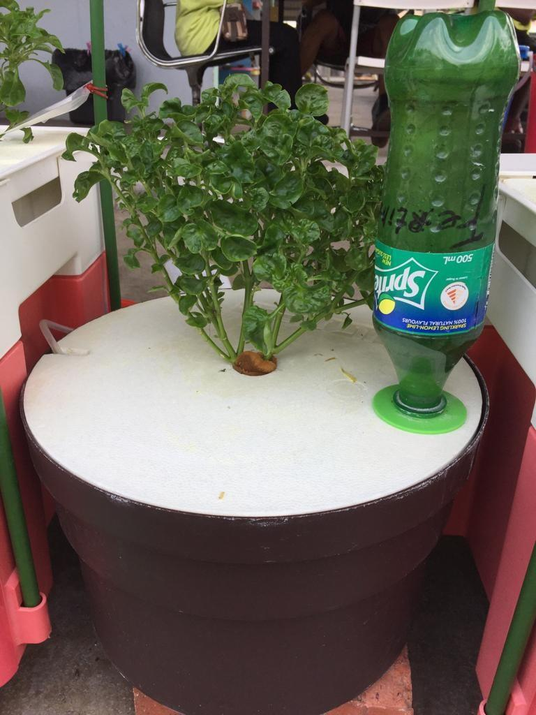 Hydroponic Kit with Brazilian Spinach