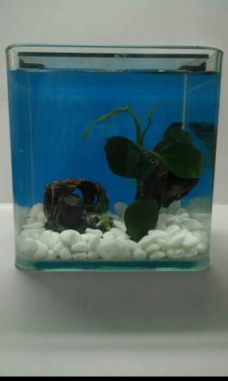 Aquarium small fish tank