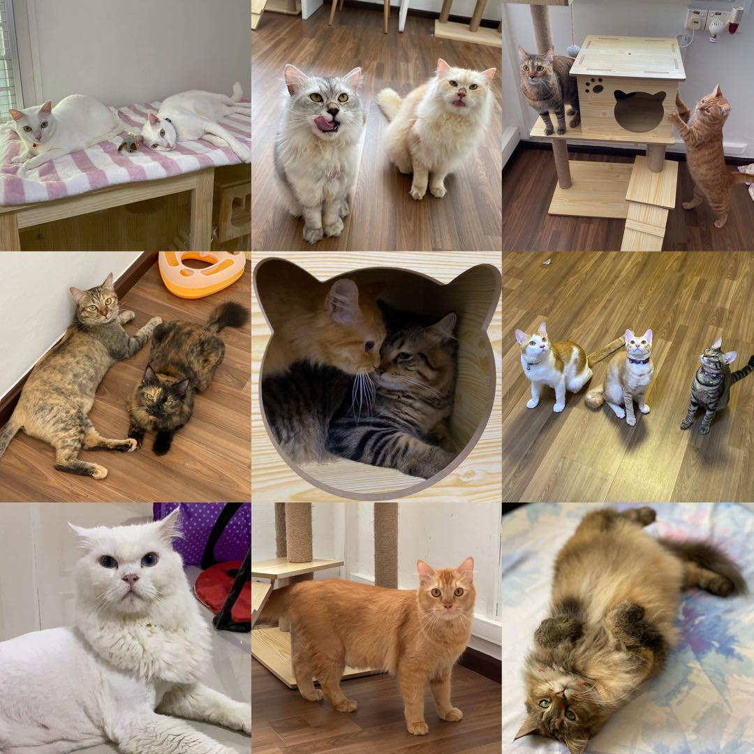 Cat Boarding & House Visits ( Cat Bowl, Litterbox and Cat Condo)